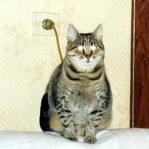 Кот-лампа